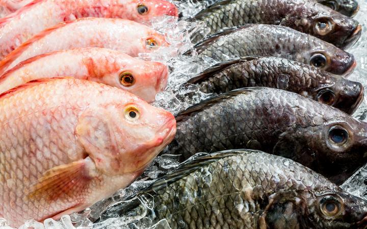 Рыболовные компании придерживаются планов по привлечению иностранных экипажей.
