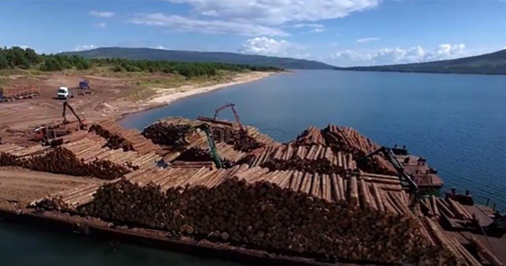 В Report говорится, что Ikea могла продавать мебель, связанную с незаконной вырубкой лесов, имеющих решающее значение для климата Земли