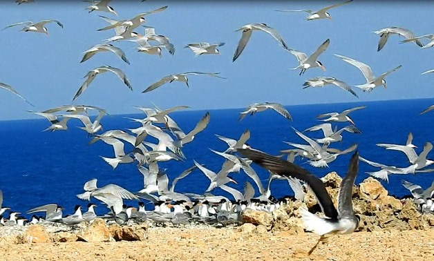File - Photo of flocks of birds migrating to the Red Sea Island, Red Sea Governorate, Egypt